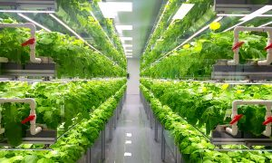Abu Dhabi to be home of world's largest indoor farm