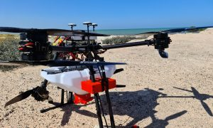 EAD and ENGIE use drone technology to rehabilitate mangroves